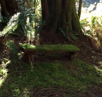 Moss-covered bench